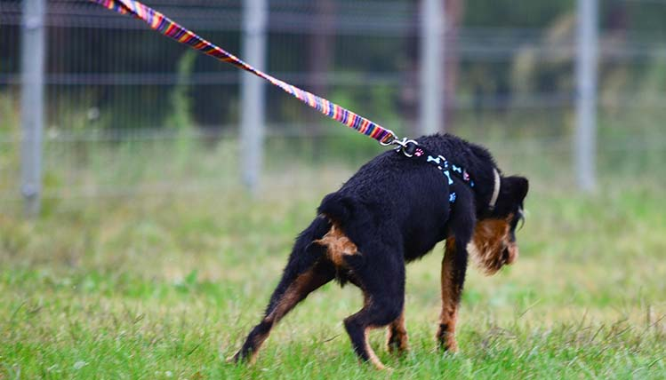 szkolenia psów warszawa 3