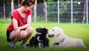 przedszkole dla psów warszawa